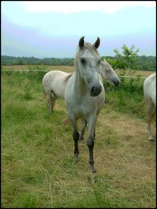 L'équitation & La photographie Mon_ot10