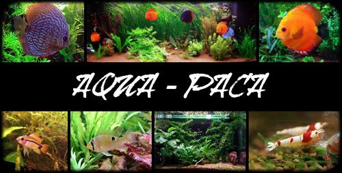 Aqua paca
