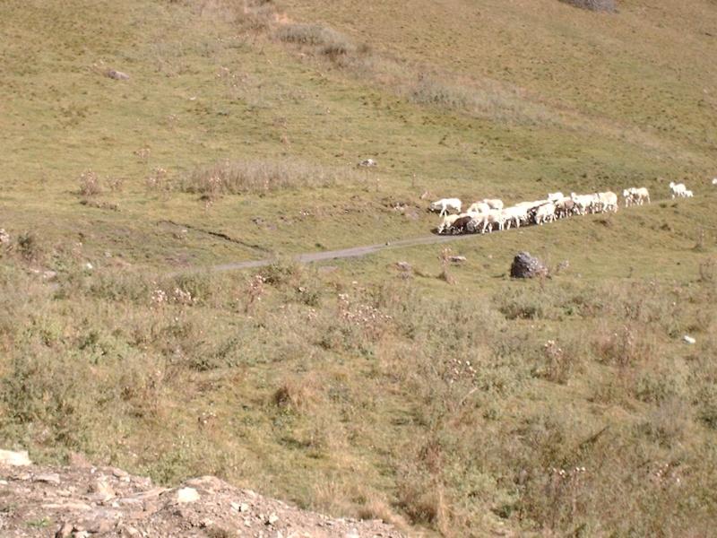 Les vaches font trop de bruits Esteno11