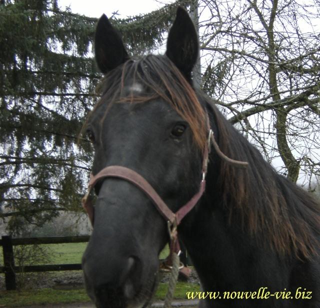 (61) Deux chevaux en urgences dans l'orne I_dene11