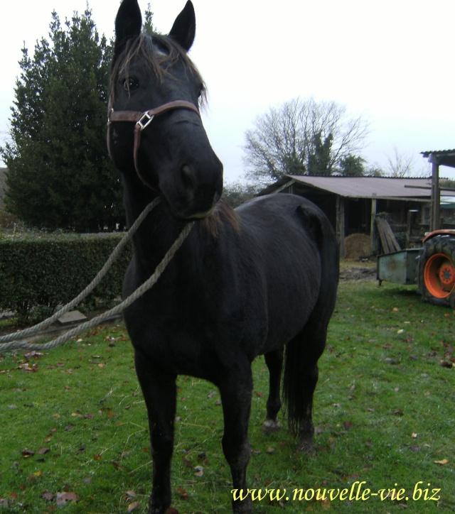 (61) Deux chevaux en urgences dans l'orne I_dene12