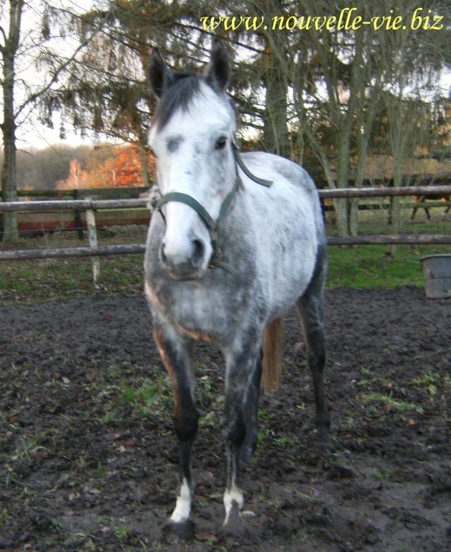 (61) Deux chevaux en urgences dans l'orne Word_o10