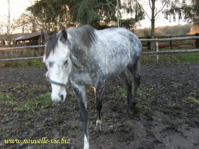 (61) Deux chevaux en urgences dans l'orne Word_o11
