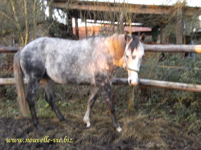 (61) Deux chevaux en urgences dans l'orne Word_o12