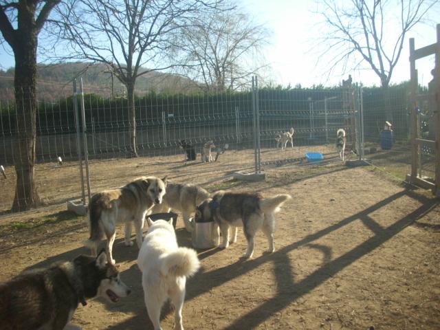 Orca, Husky, âgée de 14 ans née 20 Décembre 2000,  Eden Valley  ASSO39 On_boi10