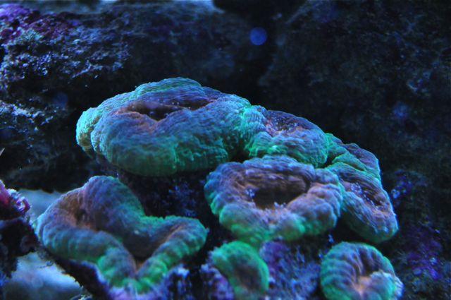le reef tank d'harold - Page 39 Cc10