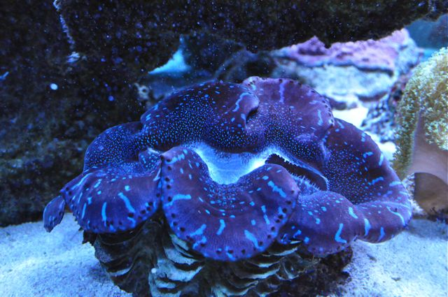 le reef tank d'harold - Page 38 Dsc_0010