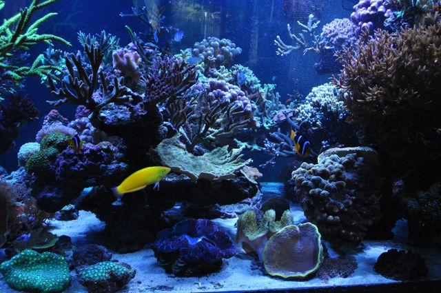 le reef tank d'harold - Page 38 Dsc_0011