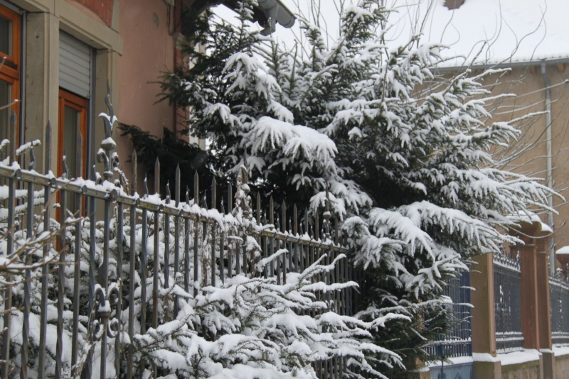 Vive la neige à Wangen ! - Page 5 Img_1712