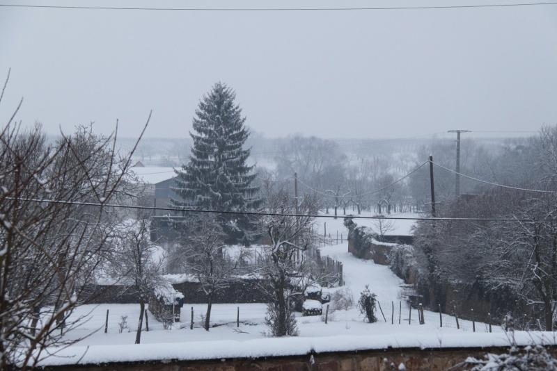 Vive la neige à Wangen ! - Page 5 Img_1721