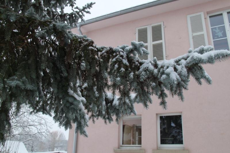 Vive la neige à Wangen ! - Page 5 Img_1723