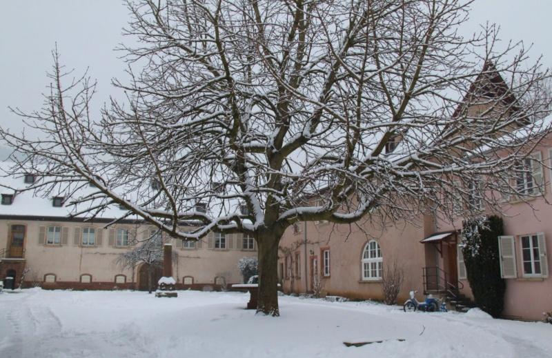 Vive la neige à Wangen ! - Page 5 Img_1727