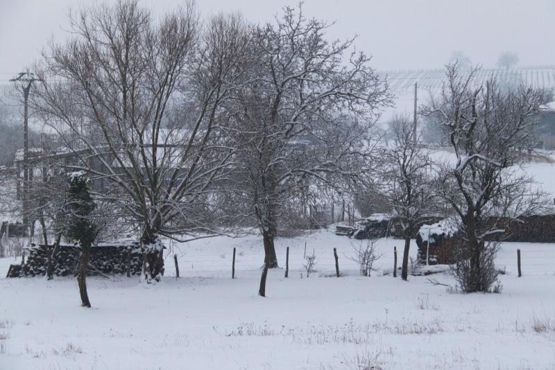 Vive la neige à Wangen ! - Page 5 Img_1733