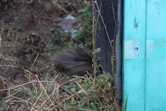 La face cachée de l'Ecole du chat de Quiberon - Page 5 Img_0422