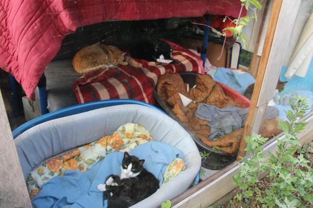 La face cachée de l'Ecole du chat de Quiberon - Page 6 Img_0668