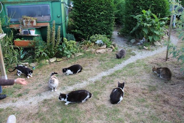 La face cachée de l'Ecole du chat de Quiberon - Page 6 Img_0670
