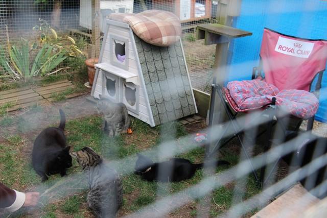 La face cachée de l'Ecole du chat de Quiberon - Page 6 Img_0671