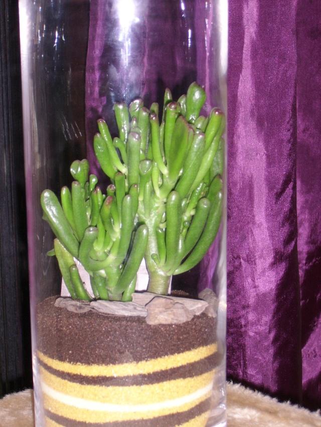 """Les plantes """"grasse"""" - Page 3 Ssa51227"""