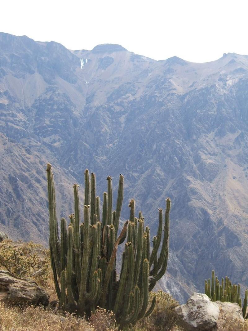 Le Pérou par Françoise Beaufils Parou_22