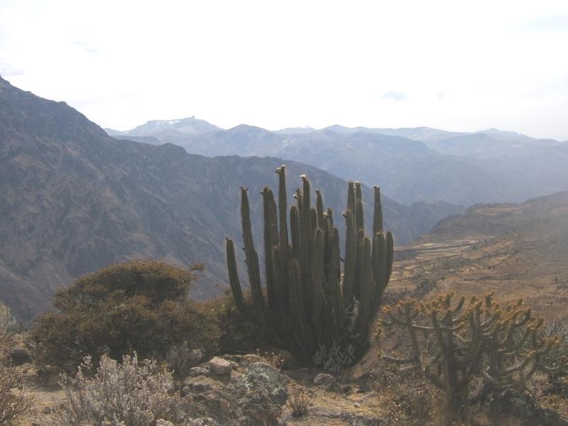 Le Pérou par Françoise Beaufils Parou_74