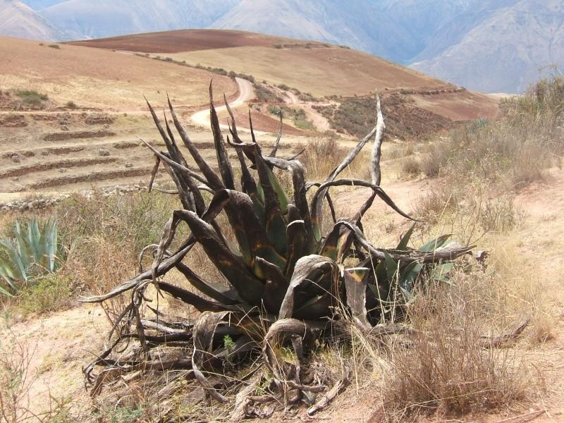 Le Pérou par Françoise Beaufils Parou_86