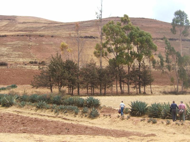 Le Pérou par Françoise Beaufils Parou_87
