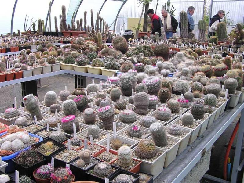La ferme aux cactus dans le Gers Photo-16