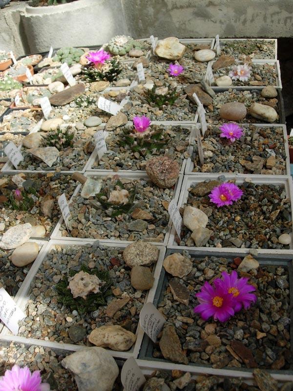 La ferme aux cactus dans le Gers Photo-18