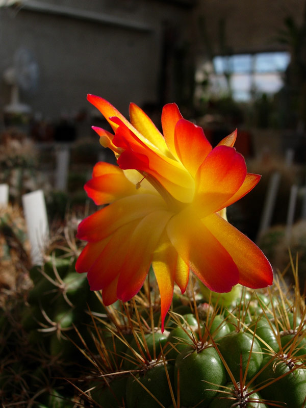 La ferme aux cactus dans le Gers Photo-19