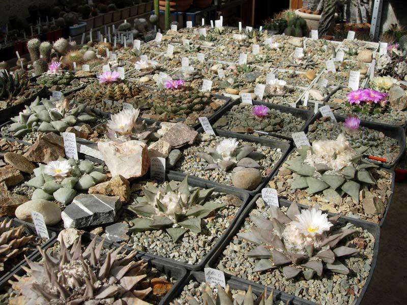 La ferme aux cactus dans le Gers Photo-20