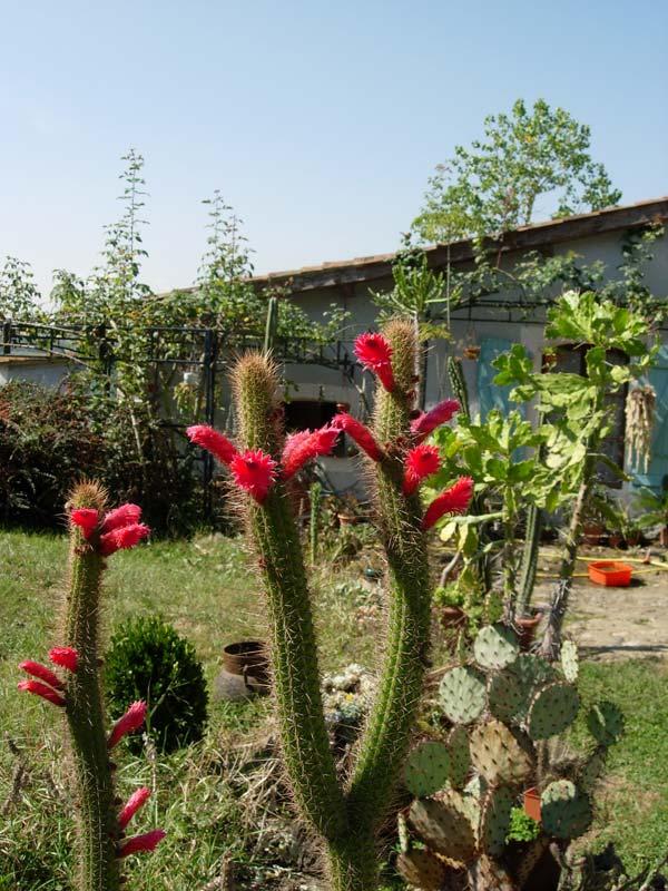 La ferme aux cactus dans le Gers Photo-21