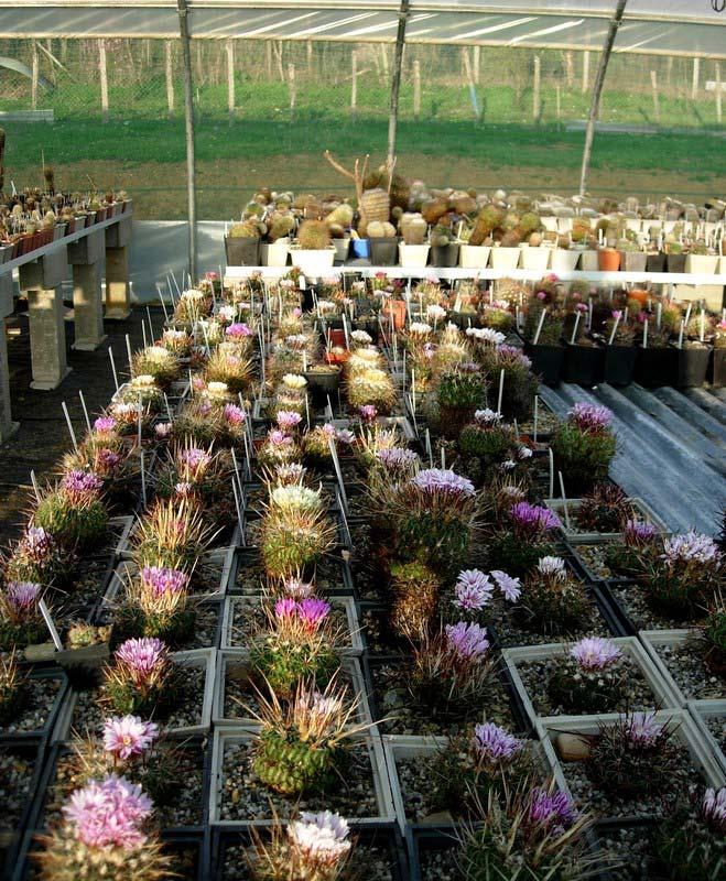 La ferme aux cactus dans le Gers Photo-24