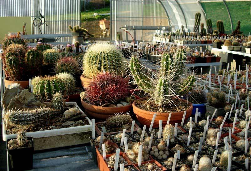 La ferme aux cactus dans le Gers Photo-25