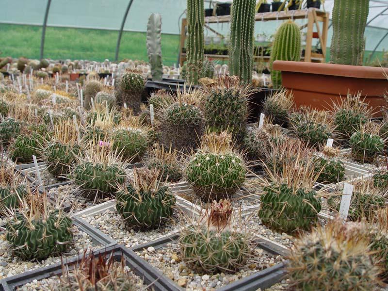 La ferme aux cactus dans le Gers Photo-27