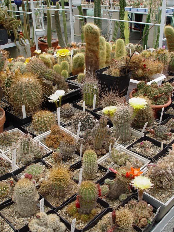 La ferme aux cactus dans le Gers Photo-28