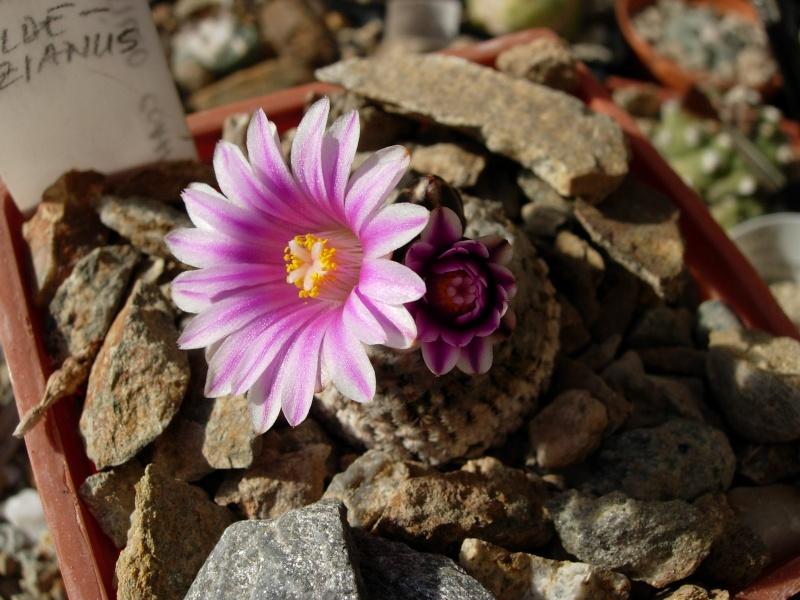 La ferme aux cactus dans le Gers Photo_25