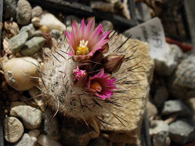 La ferme aux cactus dans le Gers Photo_26