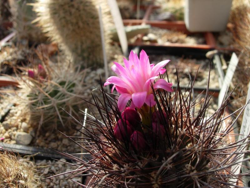 La ferme aux cactus dans le Gers Photo_29