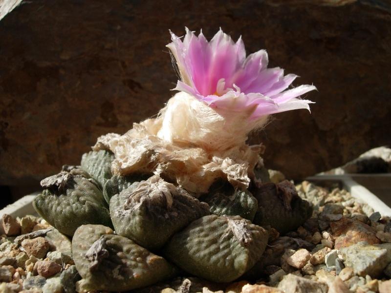 La ferme aux cactus dans le Gers Photo_35