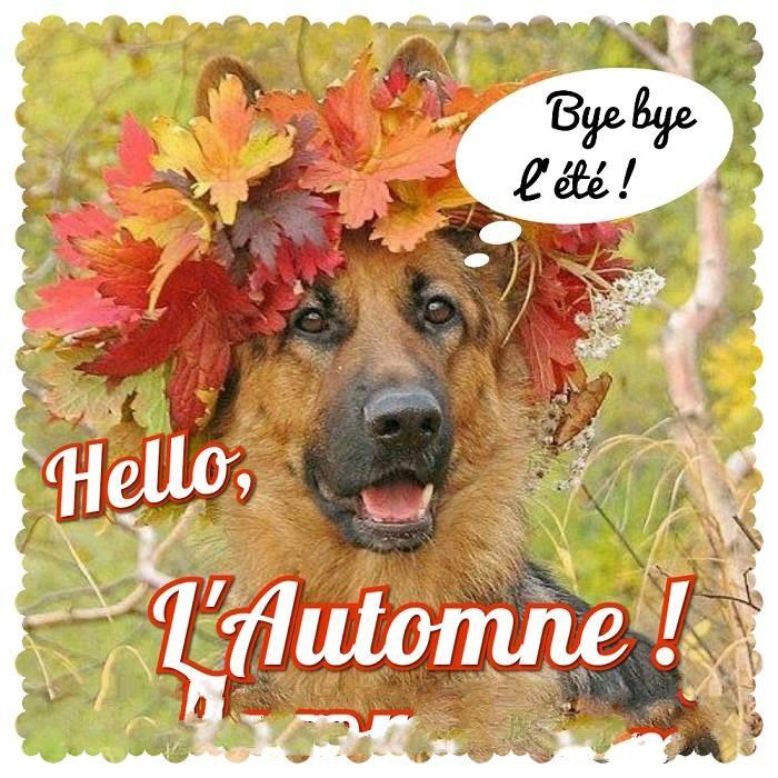 Les bonjours et contacts jounaliers du Mois de Septembre 2019 - Page 2 Automn10