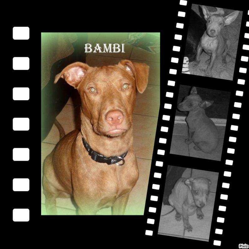 Bambi la rennaissance  Bdb5ad10