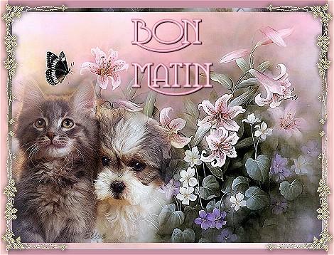 BON MARDI 27 AOÛT Chiene10