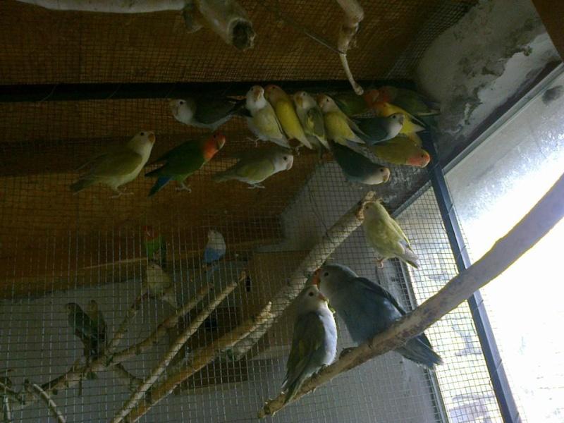 Moje ptice - Page 3 10393710