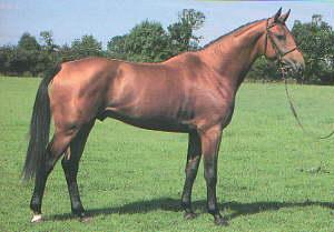 Como Classificar O Seu cavalo Curios10