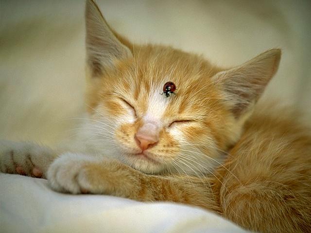 pisicikler Kedi_r12