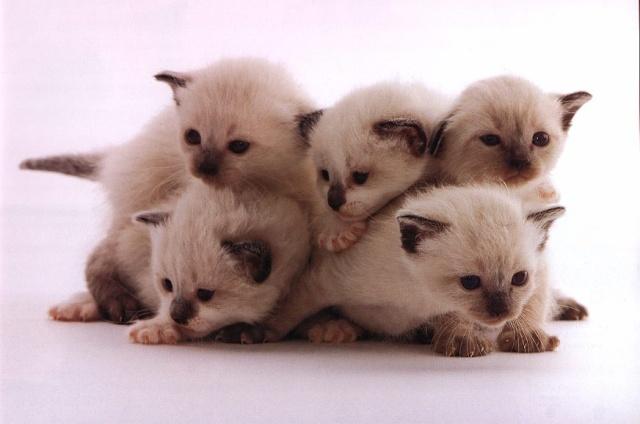 pisicikler Kedi_r16