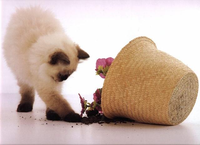 pisicikler Kedi_r17