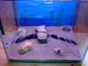 Mon premier aquarium... Photo011