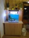 Mon premier aquarium... Photo013