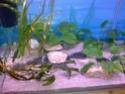 Mon premier aquarium... Photo014
